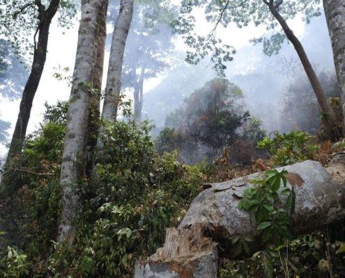 Wald in Sierra Leone._©Welthungerhilfe
