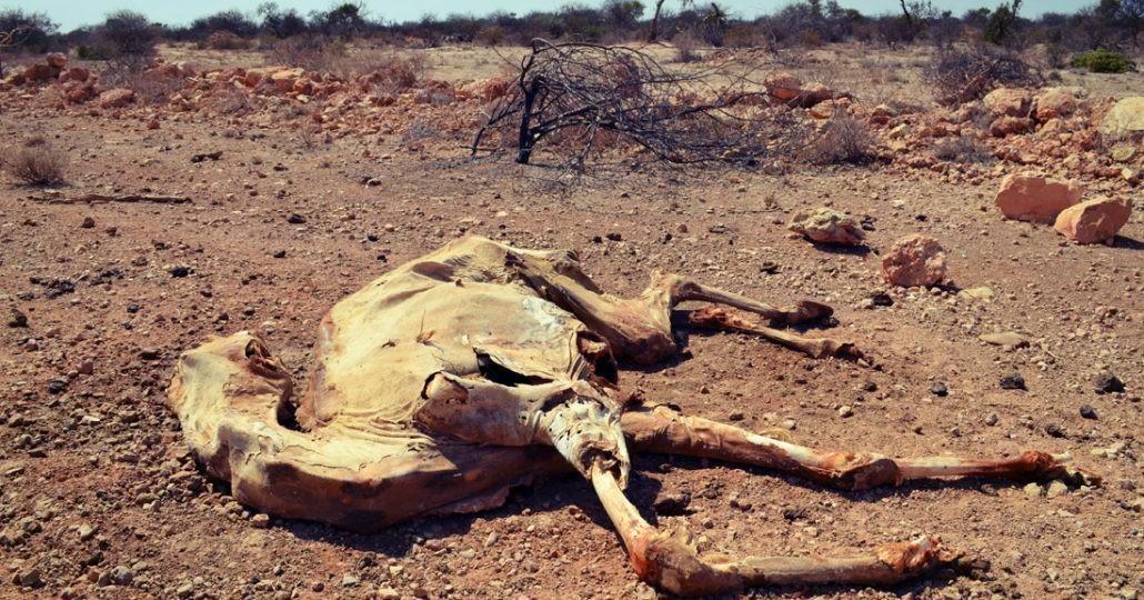 Der Klimawandel ist mit verantwortlich für Dürre und Hunger._©arche noVa