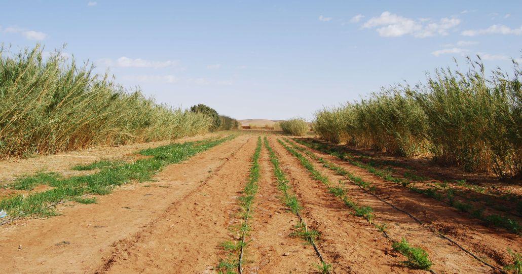 Algerien Gartenprojekt_©UNO Flüchtlingshilfe / D. Kappe